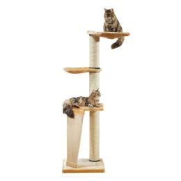 SP Tree has Cats Pisa