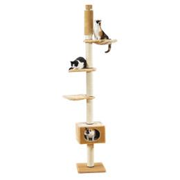 SP Tree has Cats Ascona
