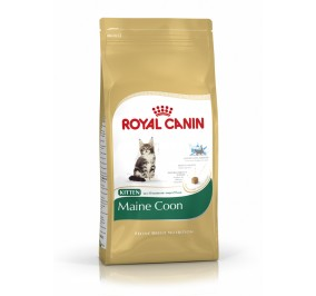 Royal Canin chat BREED MAIN COON KITTEN