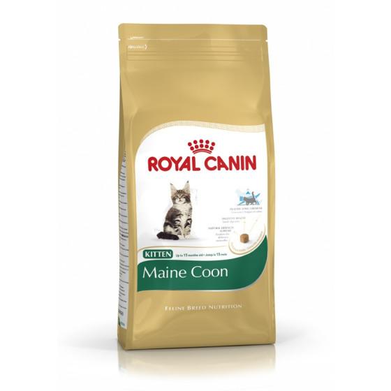 Royal Canin cat BREED MAIN COON KITTEN
