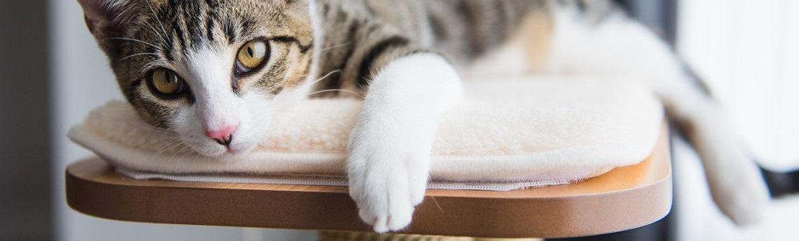 Arbre à chat / Griffoir