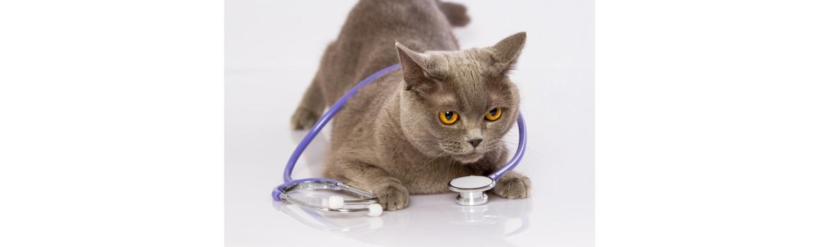 Hill's Diet cat