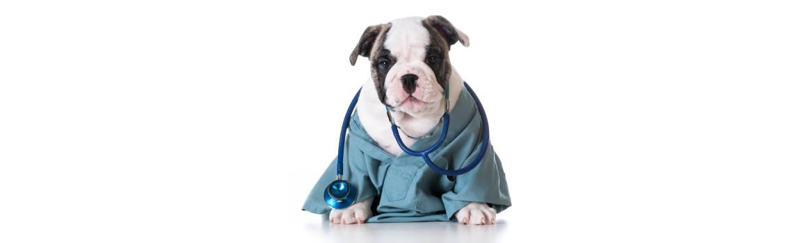 Hill's prescription Diet pour chien