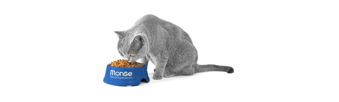Monge Cat